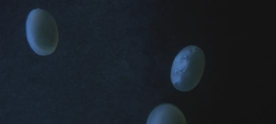 Sphere Egg 6