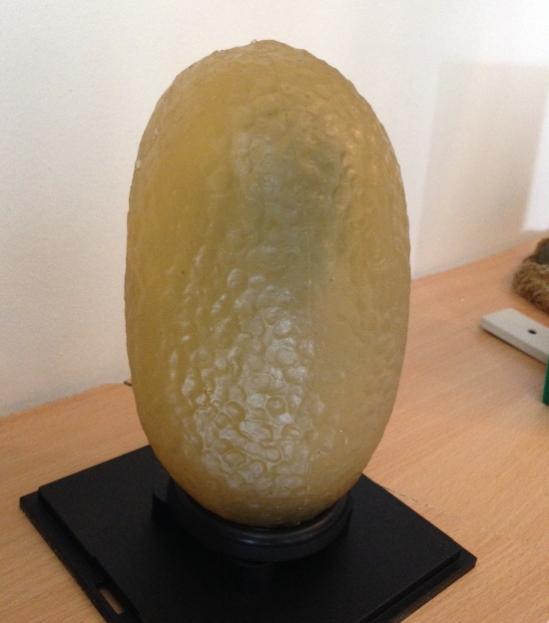 Squid Egg 1